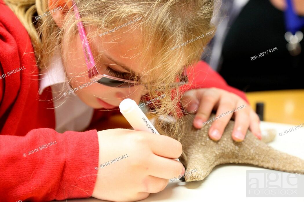 Stock Photo: Visually impaired girl drawing round large shell. Mysight Nottinghm.