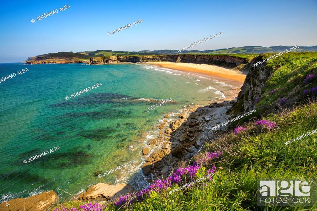 Stock Photo: Meadow of green grass and flowers. Langre beach, Ribamontan al Mar, Trasmiera coast. Cantabrian Sea. Cantabria Spain. Europe.