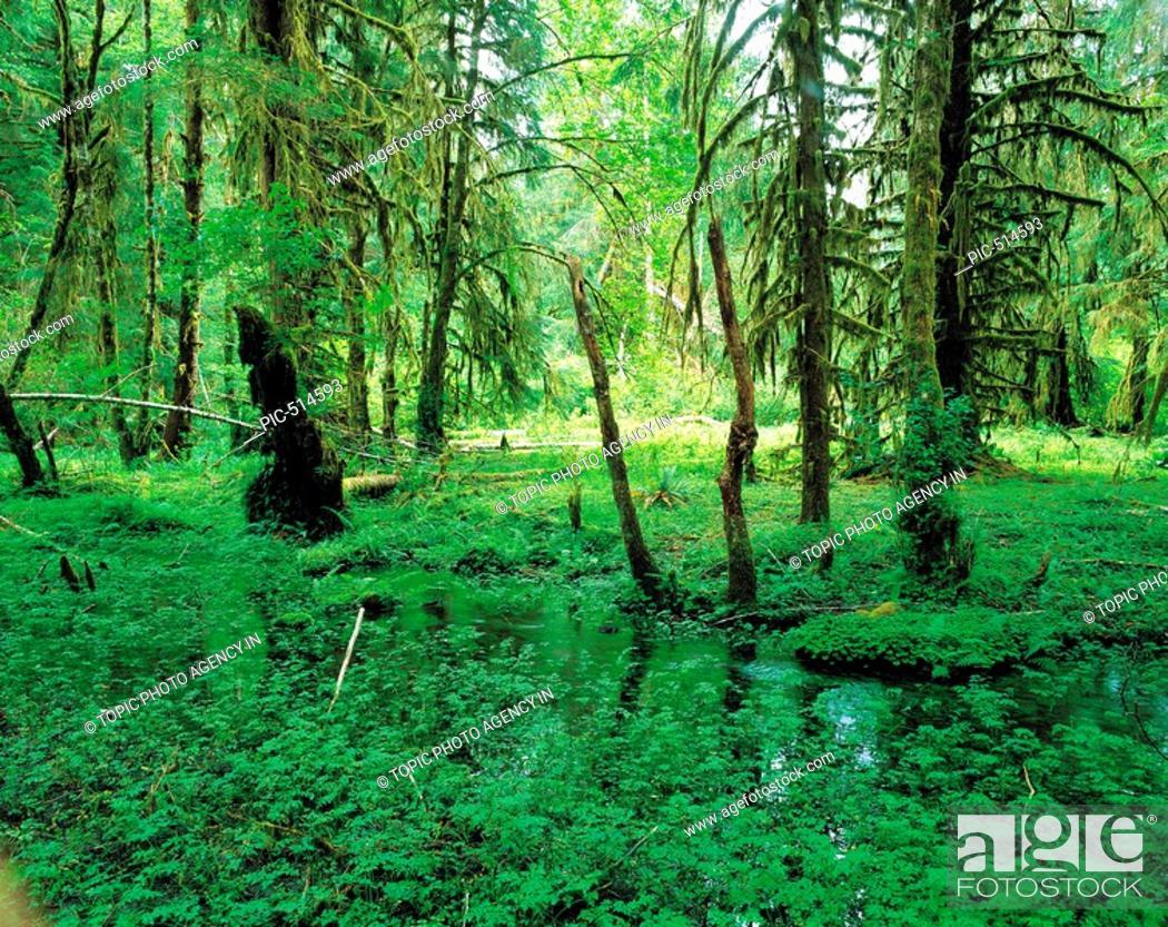 Stock Photo: Olympic National Park,Washington,USA.