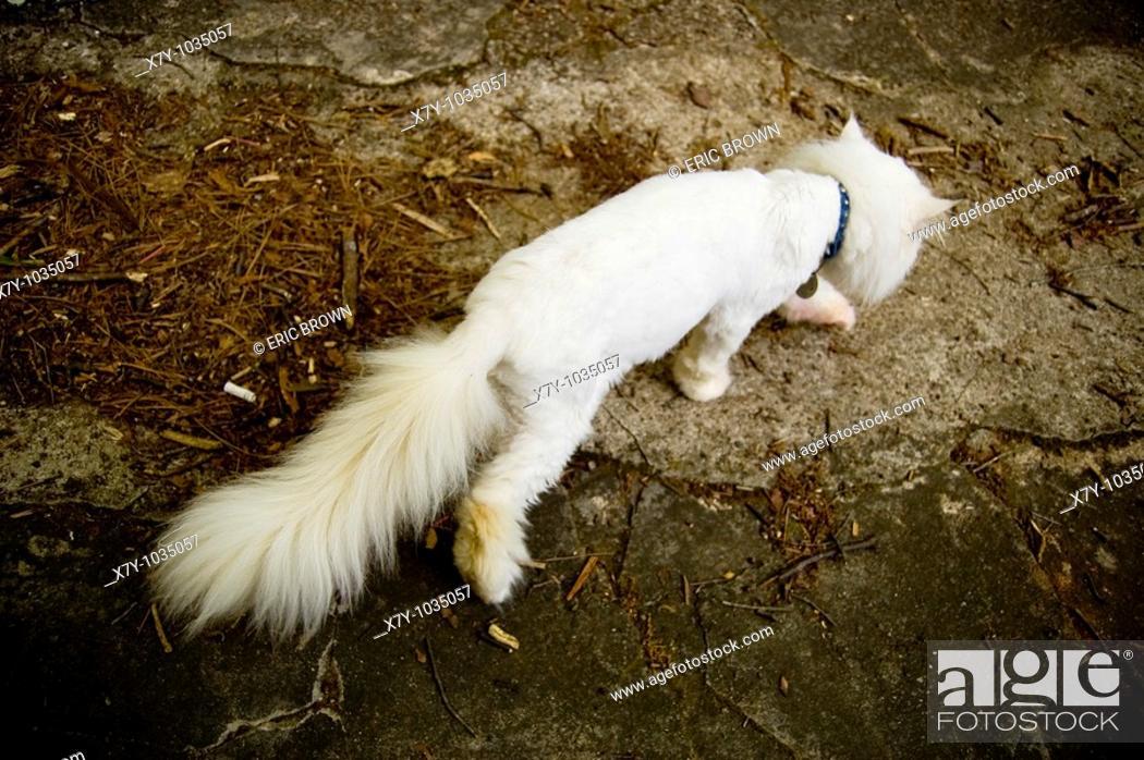 Stock Photo: A downtrodden cat walks away.