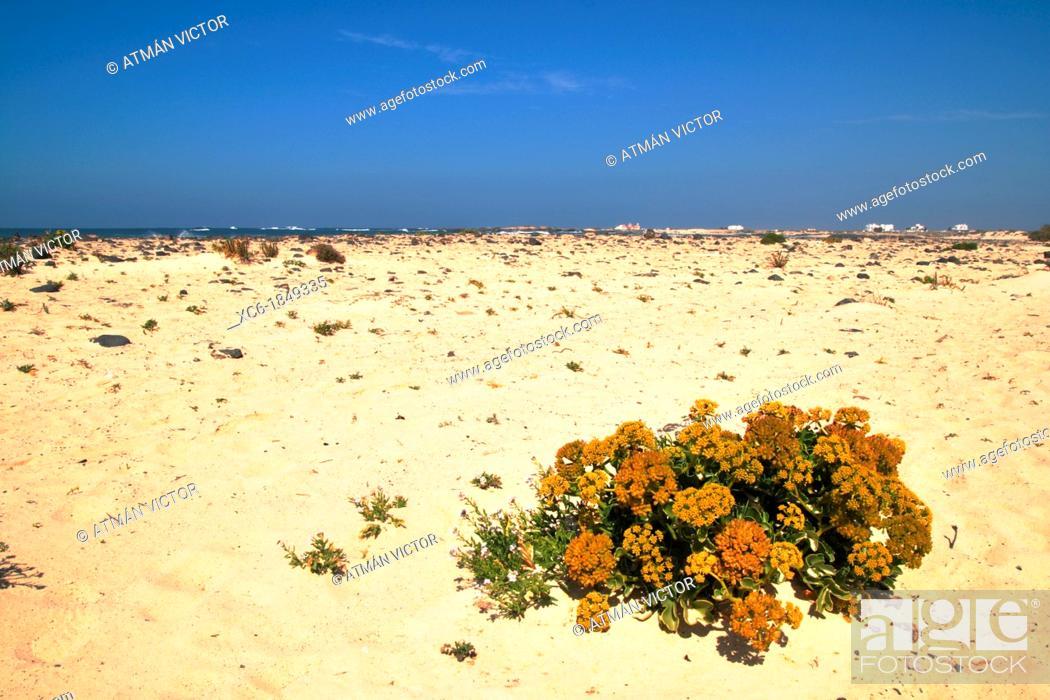 Stock Photo: Beach Cotillo Fuerteventura.