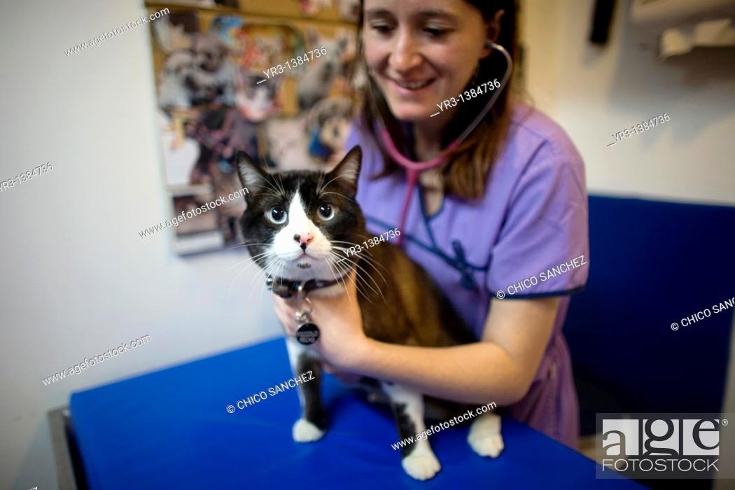 Stock Photo: A veterinarian uses a stethoscope on a cat at a Pet Hospital in Condesa, Mexico City, Mexico, February 22, 2011.
