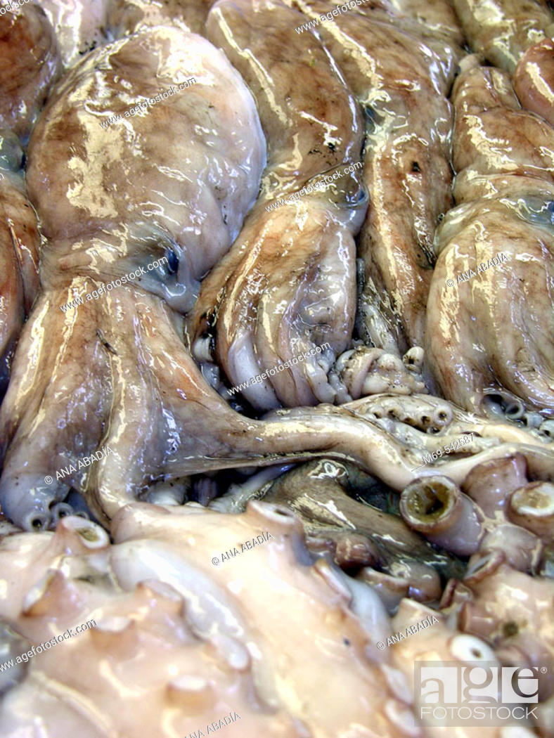 Stock Photo: Octopuses at market. Vinaroz. Castellon province. Spain.