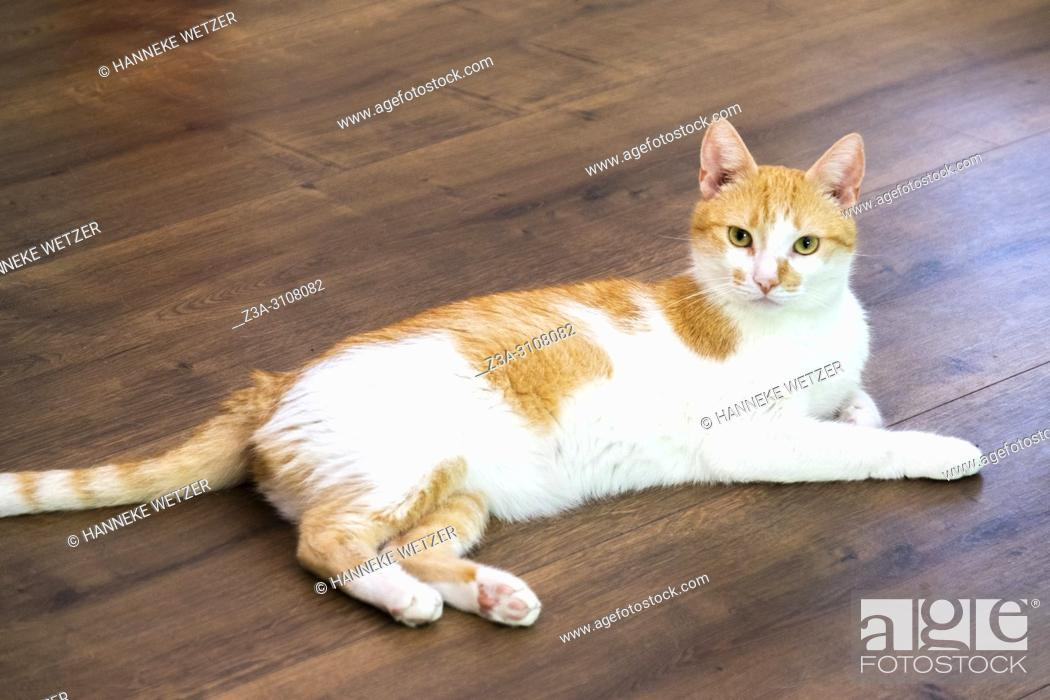 Stock Photo: Cat cafe in Leeuwarden, Friesland, The Netherlands, Europe.