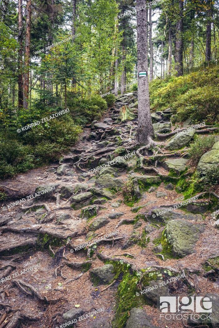 Photo de stock: Tourist trail to Naroznik Mountain in Stolowe Mountains (Table Mountains) range, part of the Sudetes, Lower Silesian Voivodeship of Poland.