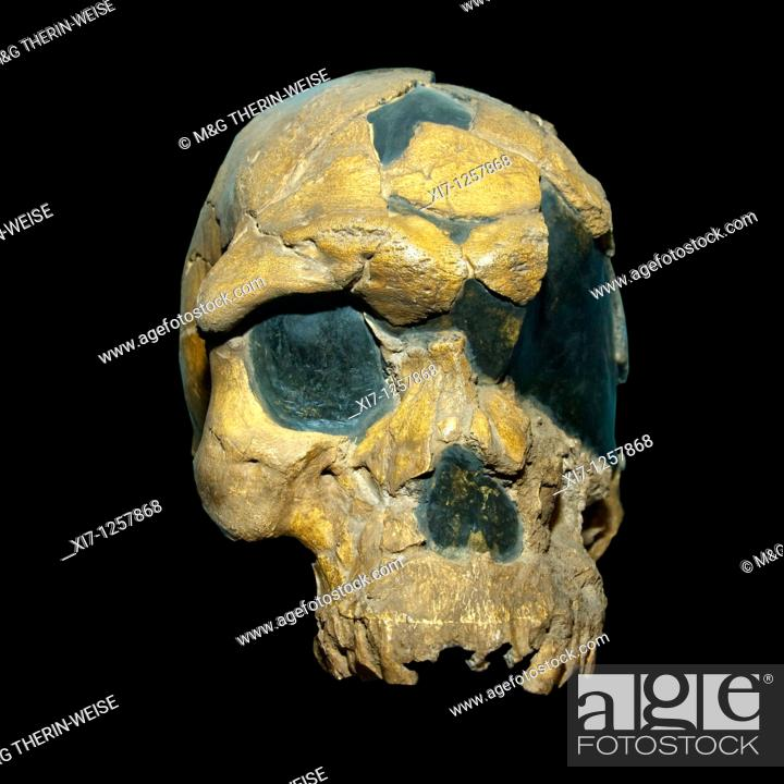 Imagen: Oldest known skull of an Homo Sapiens Fossil BOU-VP 16/1 Herto cranium, Addis Ababa National Museum, Ethiopia.