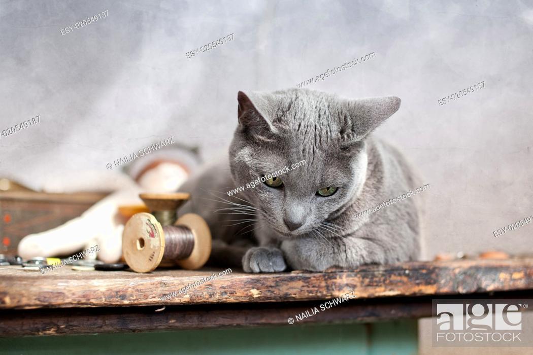 Stock Photo: Katze auf Tisch.