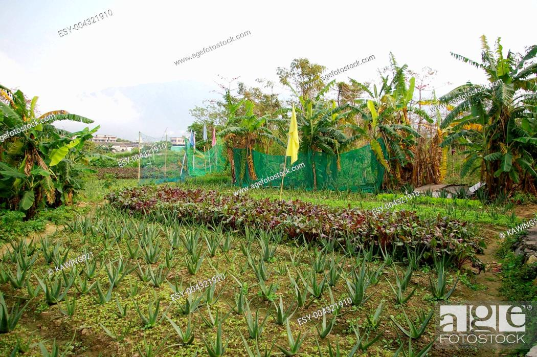 Photo de stock: Farmland in countryside.