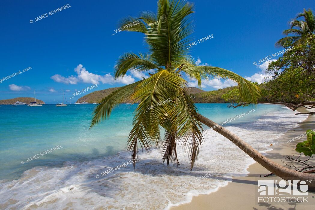 Imagen: Palm trees on Maho Bay Beach on the Caribbean Island of St John in the US Virgin Islands.