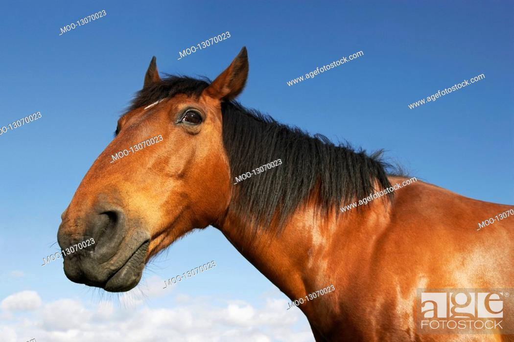 Stock Photo: Brown horse against sky.