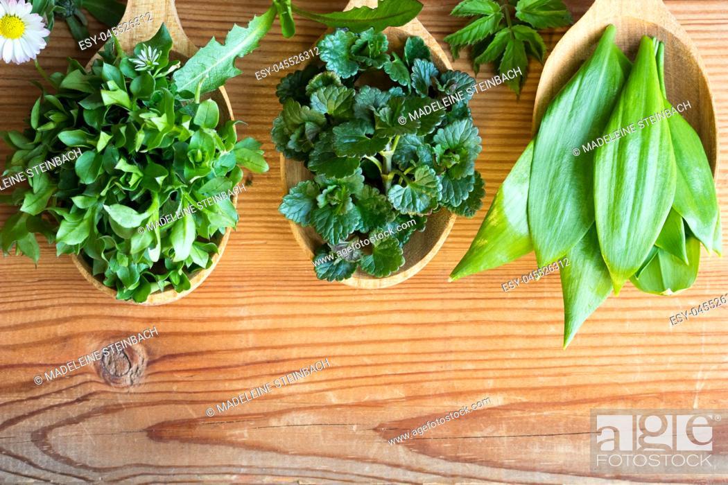 Stock Photo: Fresh wild edible spring herbs on three wooden spoons: chickweed, ground-ivy, wild garlic, daisy, dandelion, ground elder.