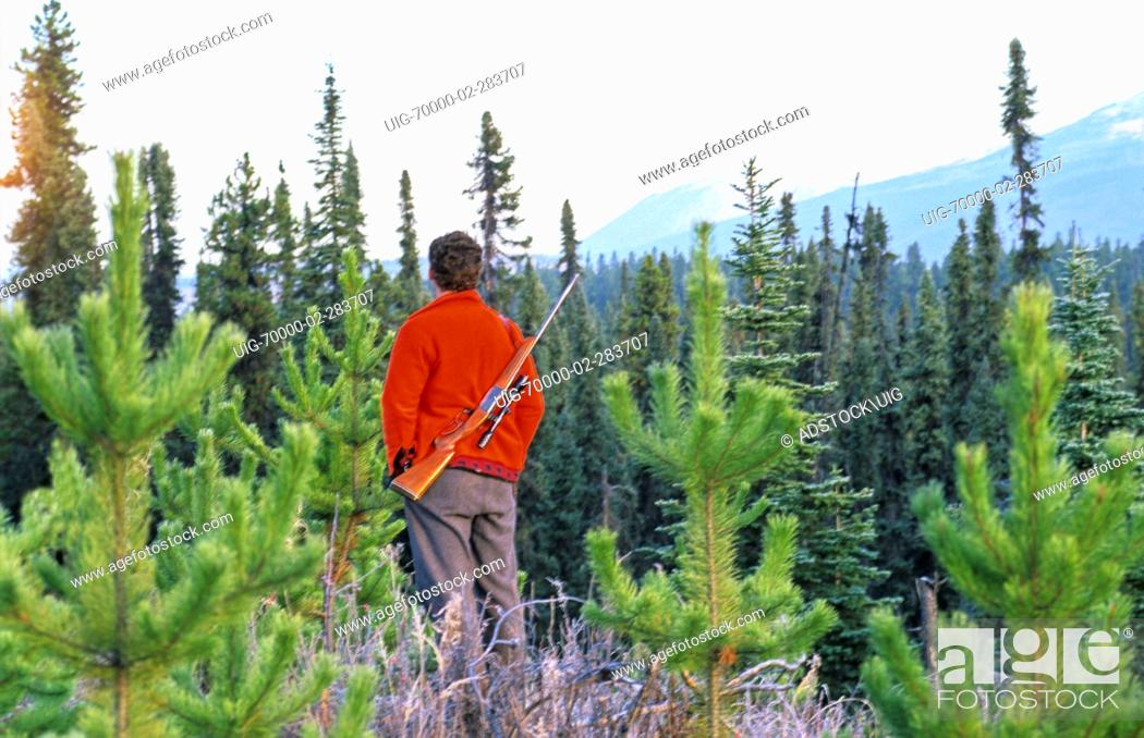 Stock Photo: A moose hunter stands and looks over some moose habitat.