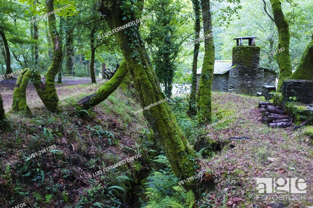 Imagen: Shelter cabin at a dense Galician native forest by the river Sor. Ponte Segade, Lugo province, Galicia, Spain, Europe.