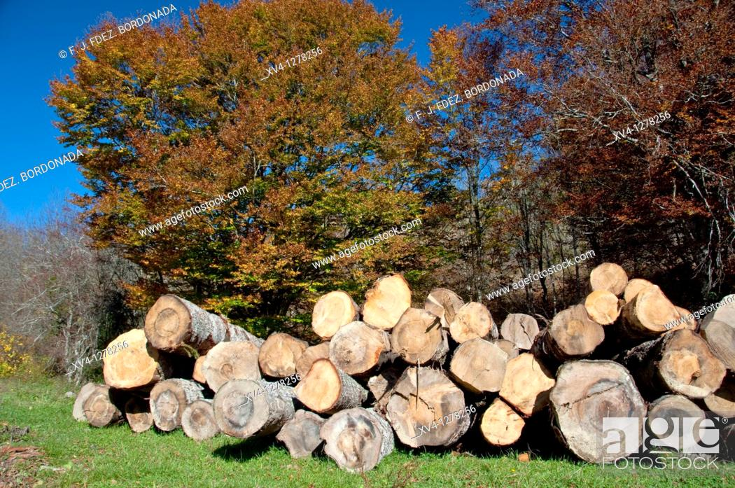 Stock Photo: Logs in forest of Navarre Pyrenees  Spain  Europe.