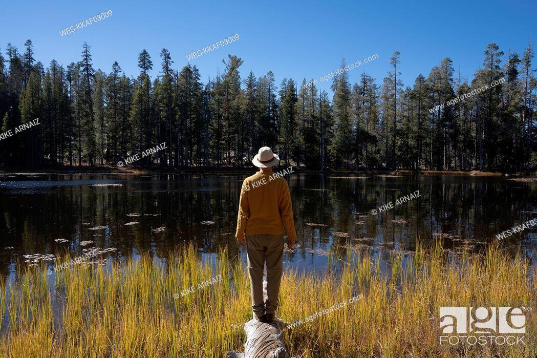 Stock Photo: USA, California, Yosemite National Park, hiker standing on tree trunk in autumn.