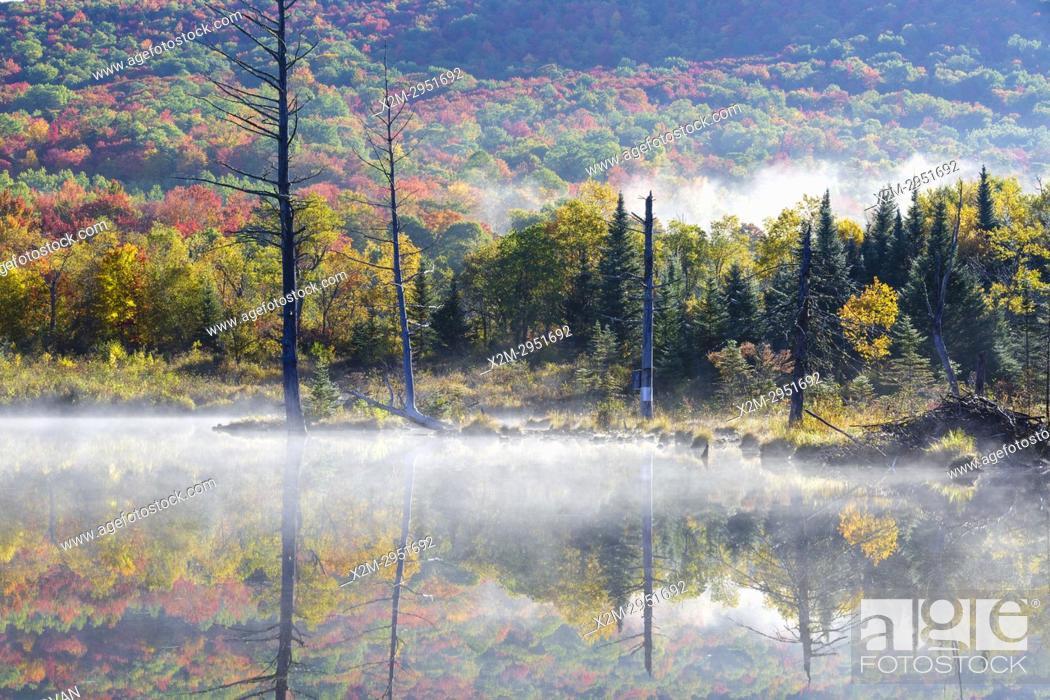Stock Photo: Wildlife Pond in Bethlehem, New Hampshire USA on a foggy autumn morning.