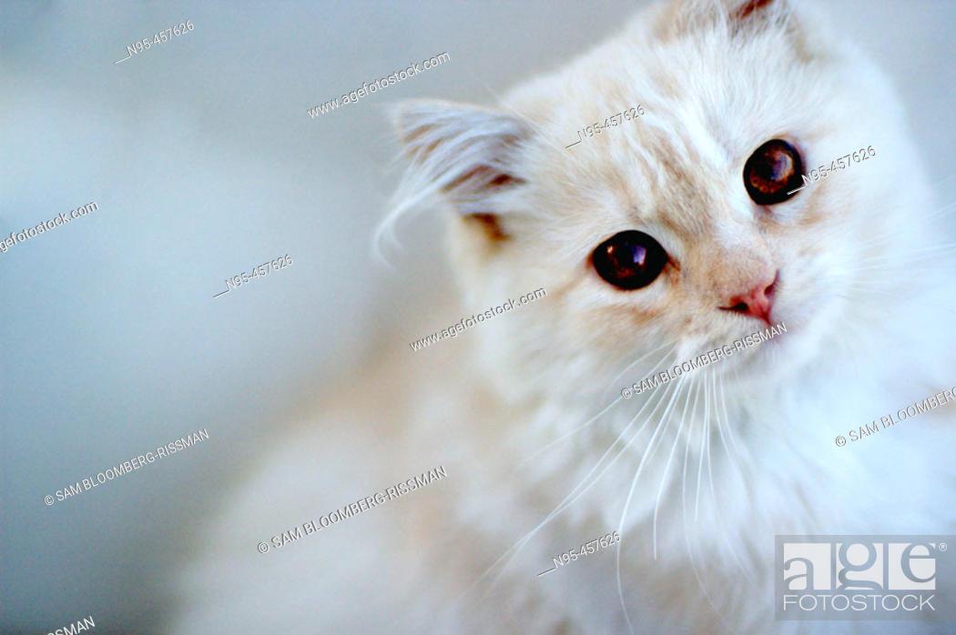 Stock Photo: Cat looking pensive.