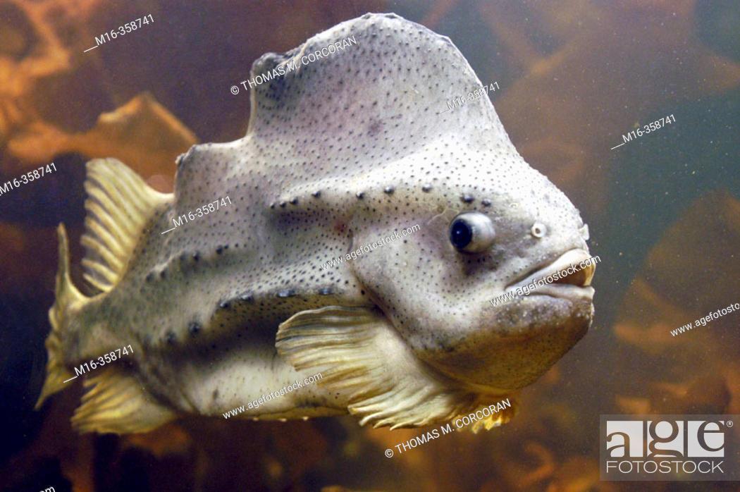 Stock Photo: Rocky shore fish National Aquarium.