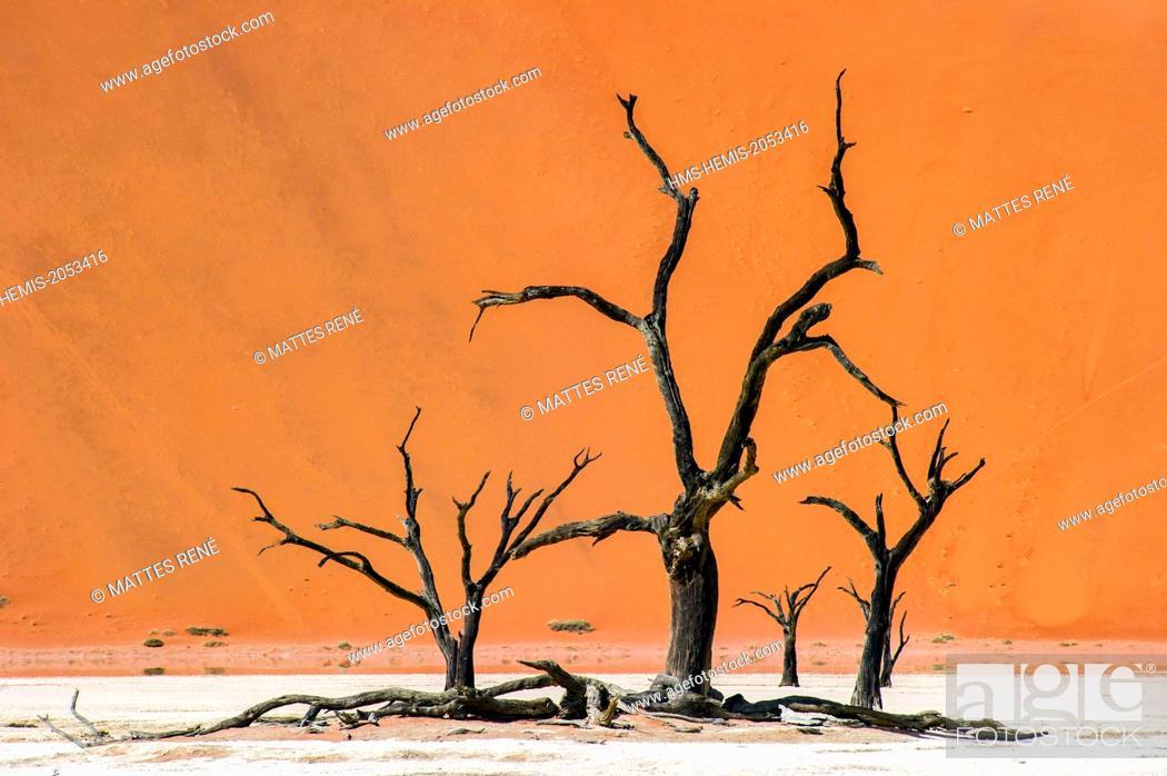 Stock Photo: Namibia, Hardap region, Namib desert, Namib-Naukluft national park, Namib Sand Sea listed as World Heritage by UNESCO, Sossusvlei dunes, Dead Vlei.