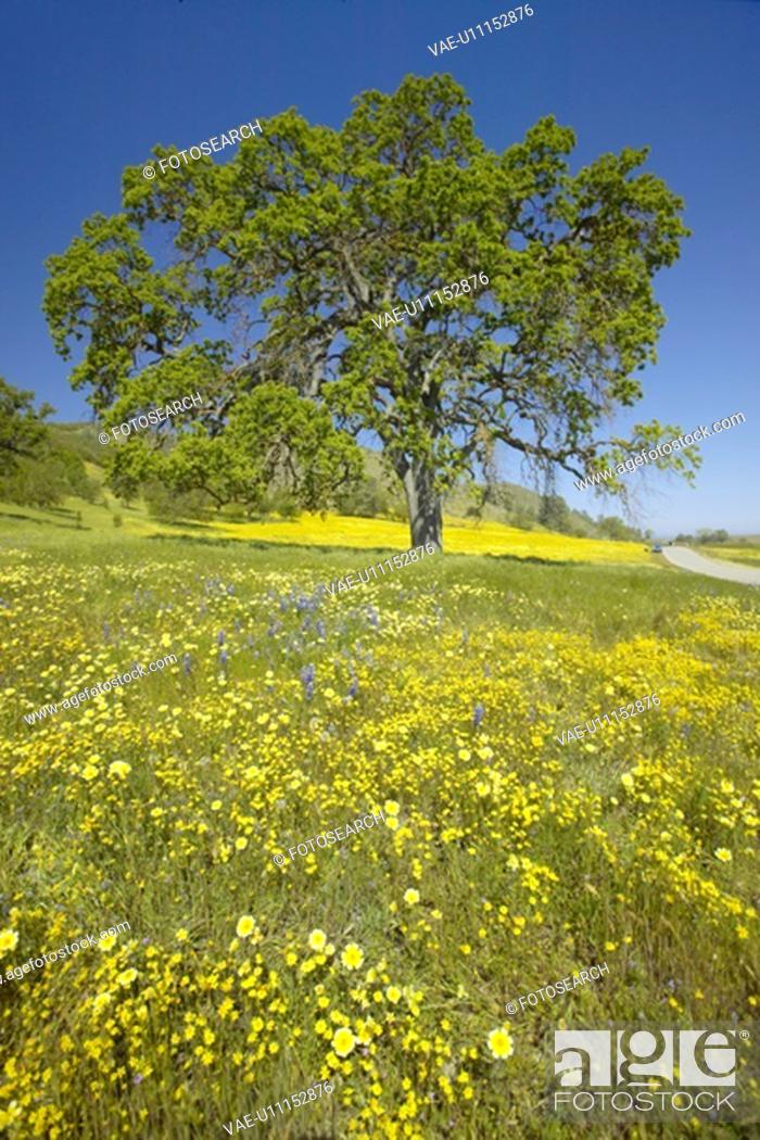 Stock Photo: Lone tree and spring flowers blossoming.