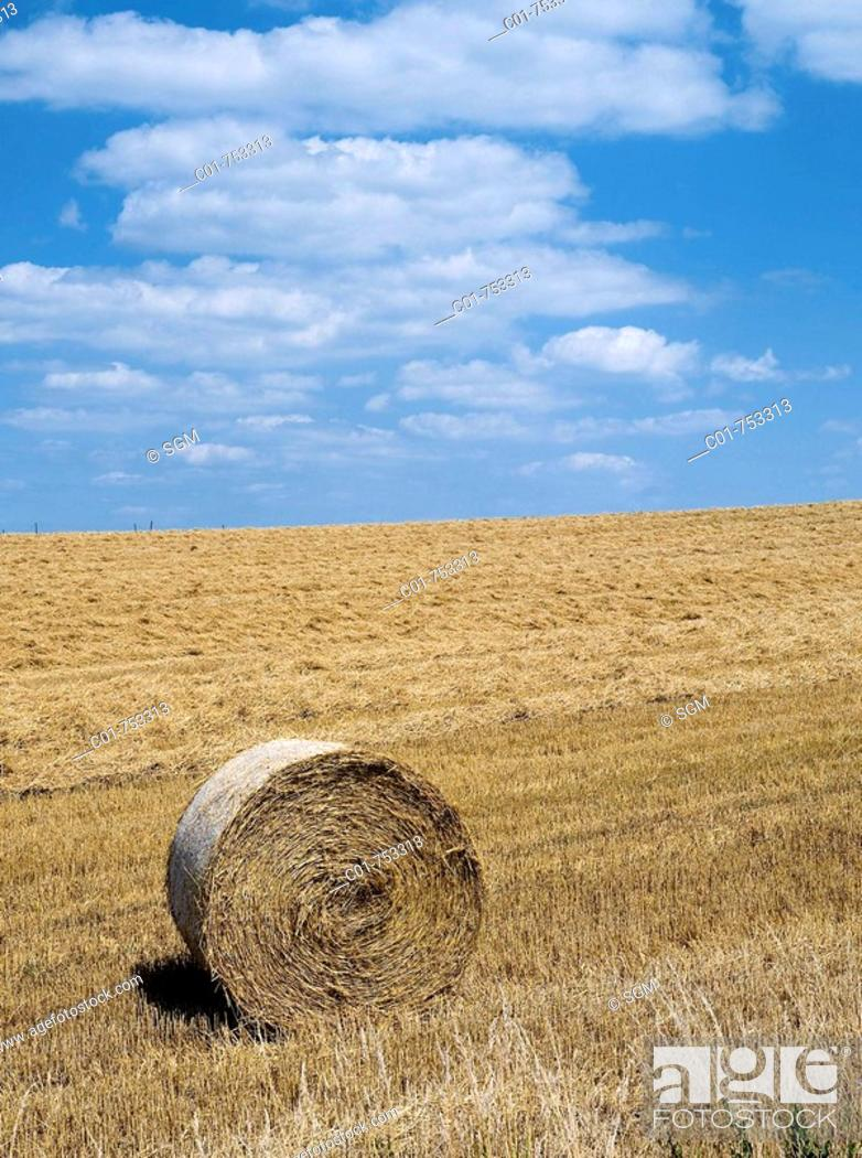 Stock Photo: Wheat straw bale in harvested field. Alsace, France.