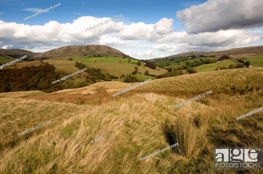 Stock Photo: View of hilly countryside, Harter Fell, from Bluecaster, Howgills, Cumbria, England, autumn.