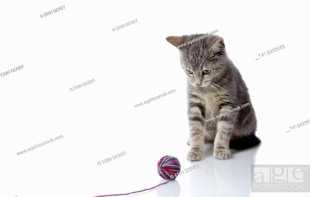 Stock Photo: Kitten with yarn.