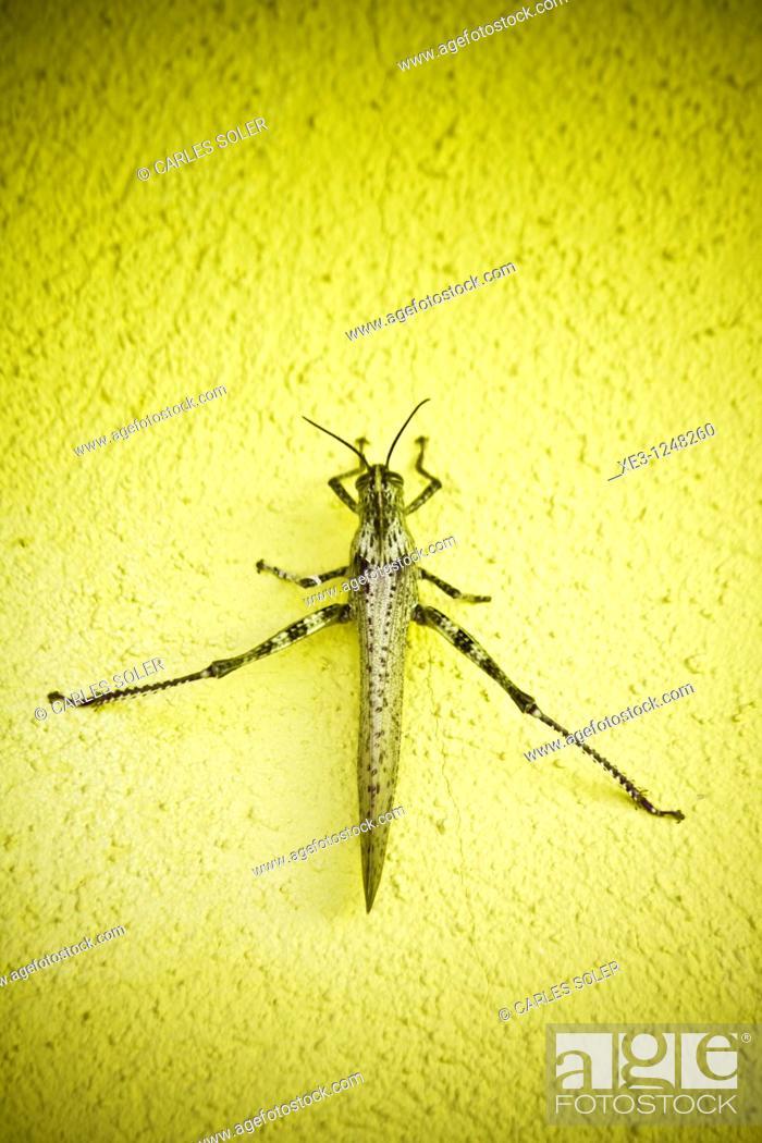 Stock Photo: Grasshopper.