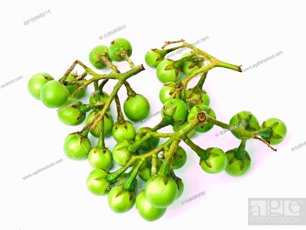 Stock Photo: Pea Eggplant, Solanum torvum , isolated on white background.