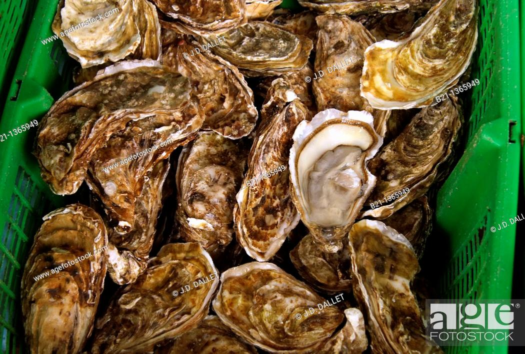 Stock Photo: France, Aquitaine, Gironde, Food: 'Huitres' oysters.