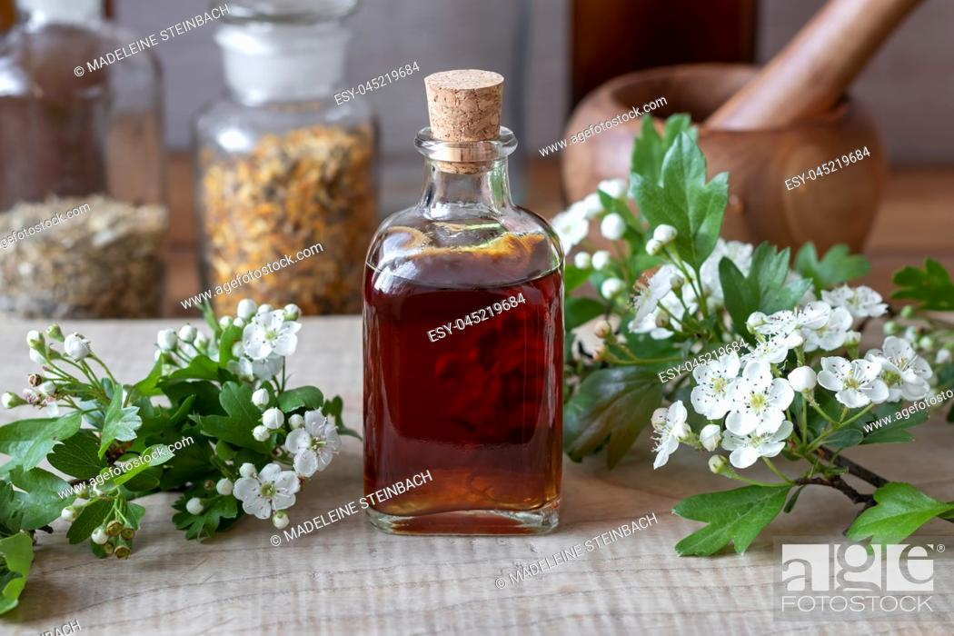 Stock Photo: A bottle of homemade herbal tincture with fresh blooming hawthorn branches.