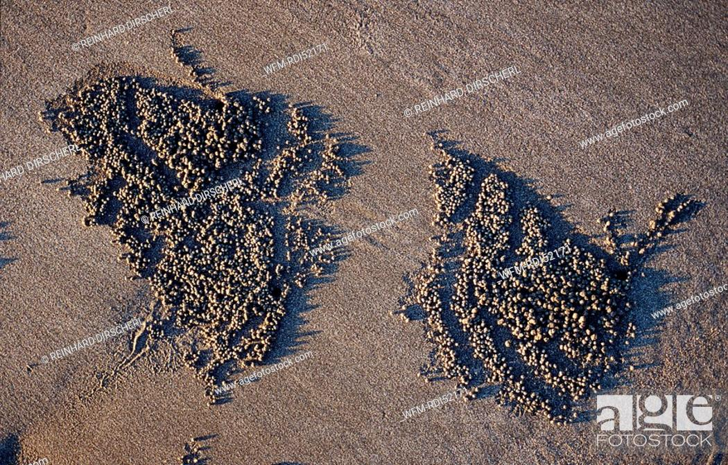 Stock Photo: Sand formation made by Ghost crab, Ocypodae sp., Indian Ocean Bali, Indonesia.