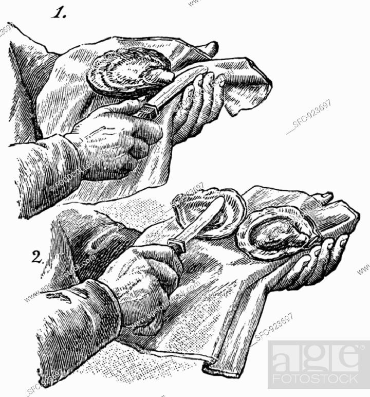 Stock Photo: Opening oysters (illustration).