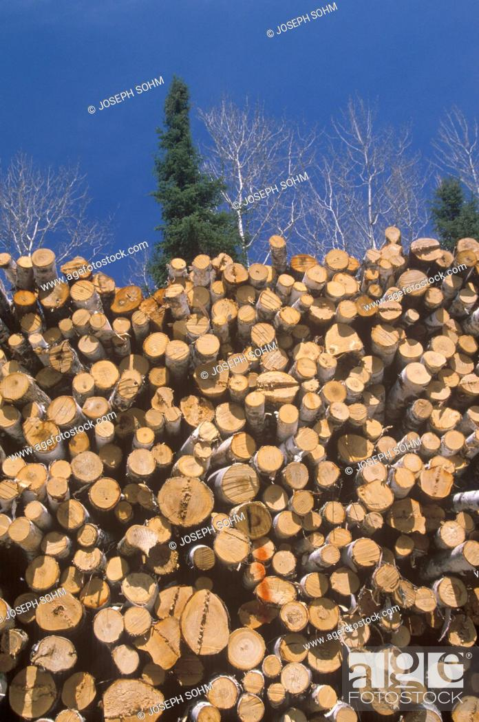 Stock Photo: Recently cut logs awaiting processing at a Wisconsin mill.