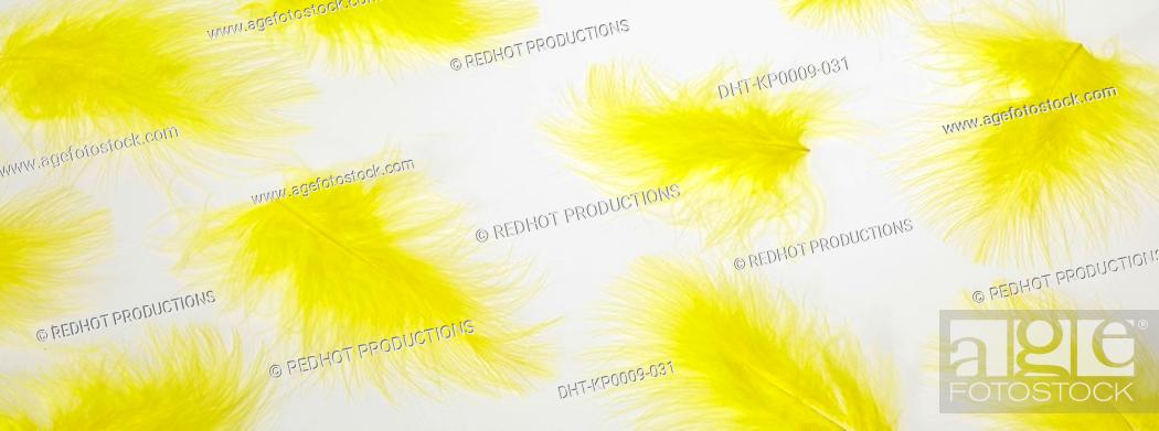 Stock Photo: Yellow feathers on a table.