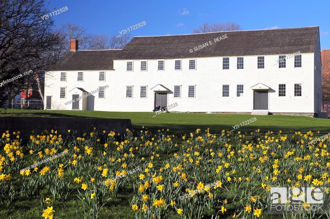 Stock Photo: Daffodils in front of Great Friends Meeting House built 1699  Newport, Rhode Island.
