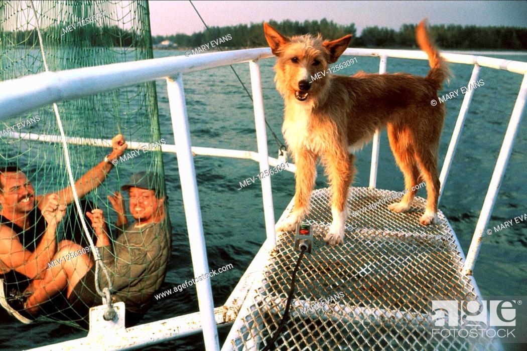 Zeus The Dog Film Zeus And Roxanne 1997 Director George