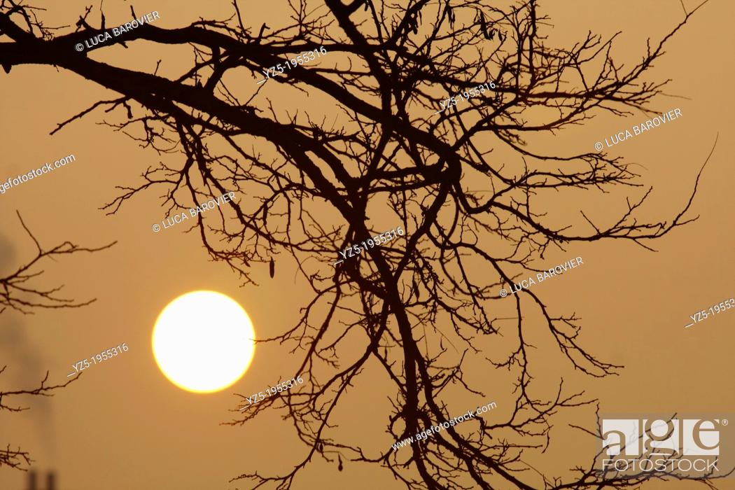 Stock Photo: Rising sun and tree.