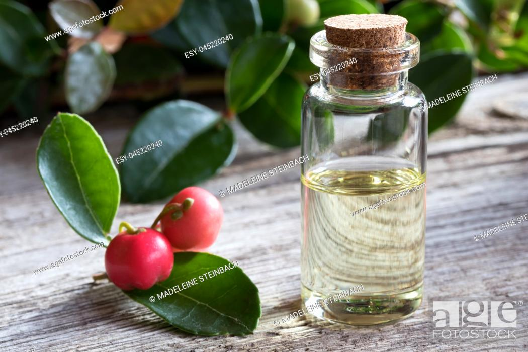 Stock Photo: A transparent bottle of wintergreen essential oil on white painted wood, with wintergreen berries and leaves in the background.
