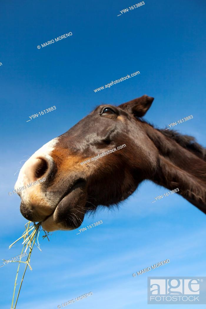 Stock Photo: Portrait of a horse at a riding school in Knysna, South Africa.