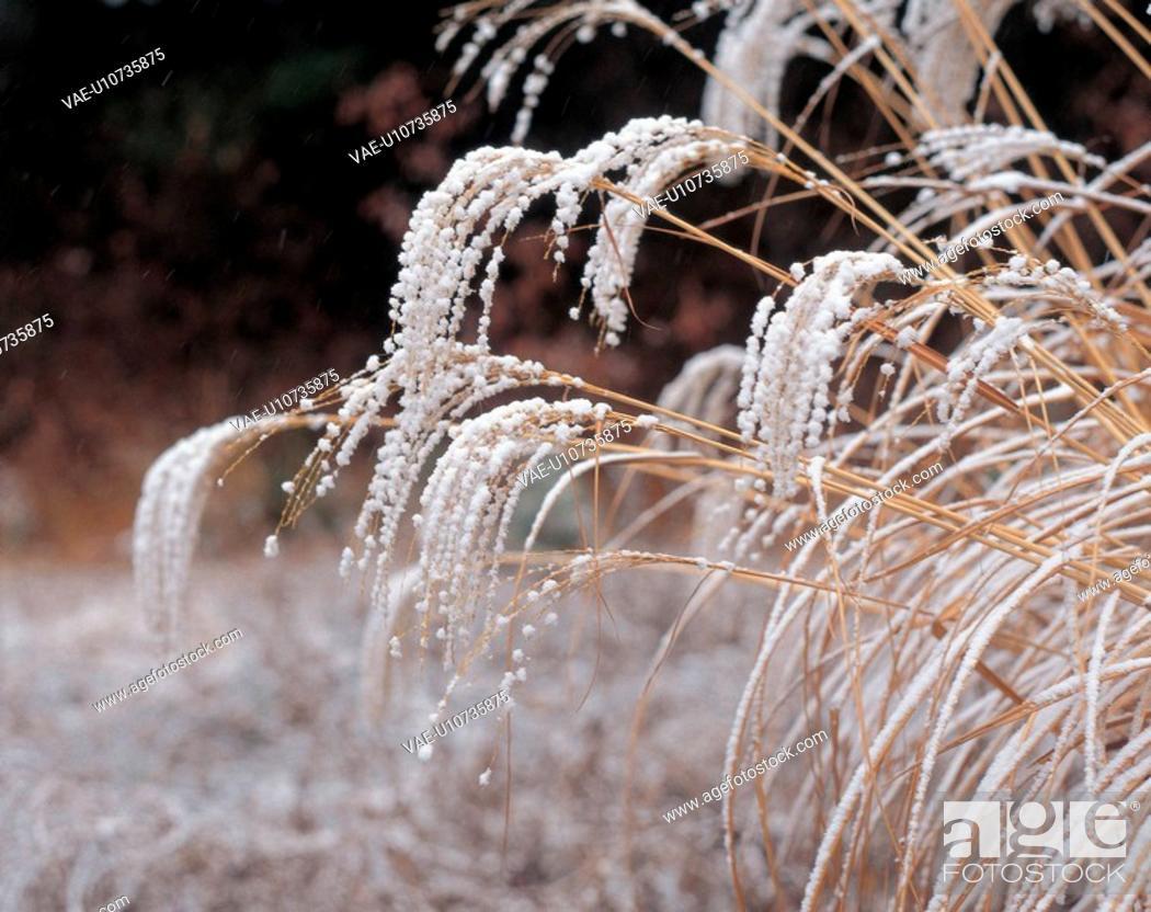 Stock Photo: landscape, nature, natural world, winter, scenery, snow.