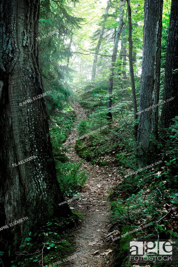 Imagen: A winding trail covered in fallen leaves deep in a lush green sunny forest.