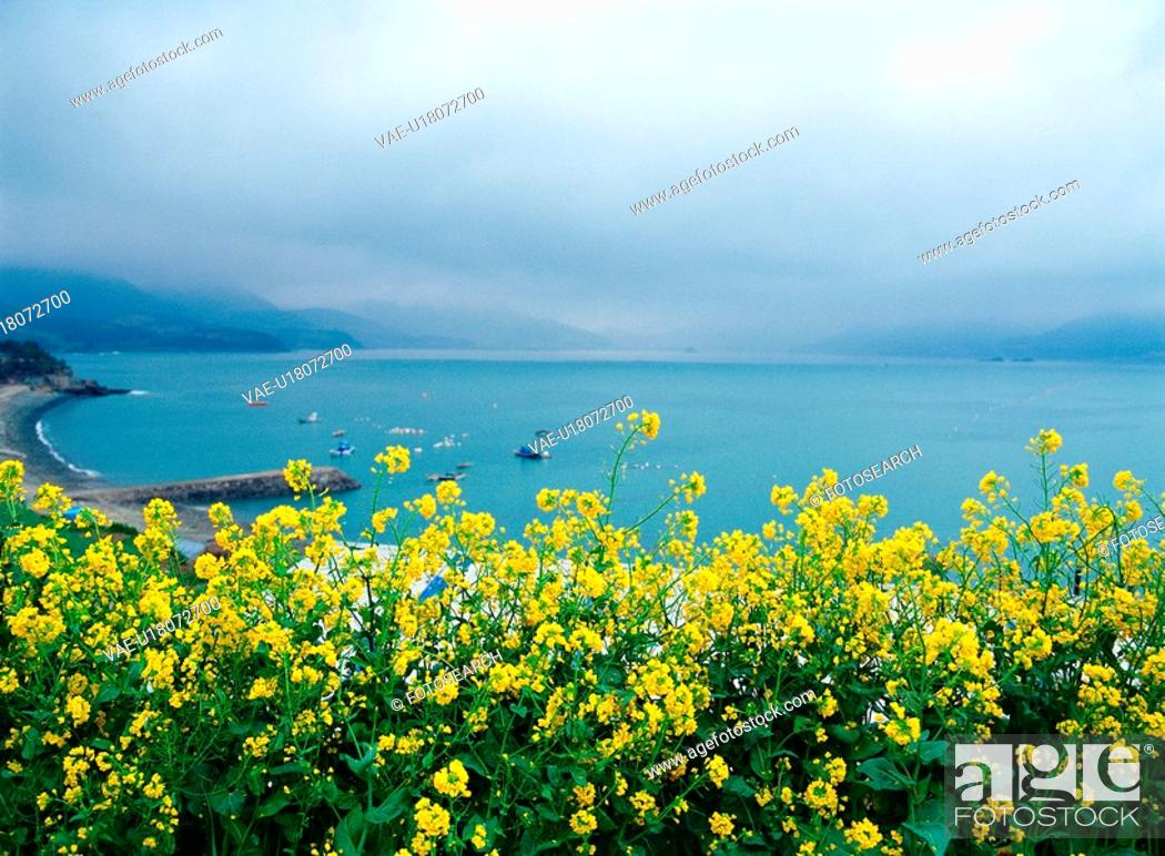 Stock Photo: sea, spring, flower, plant, nature, sky, scenery.
