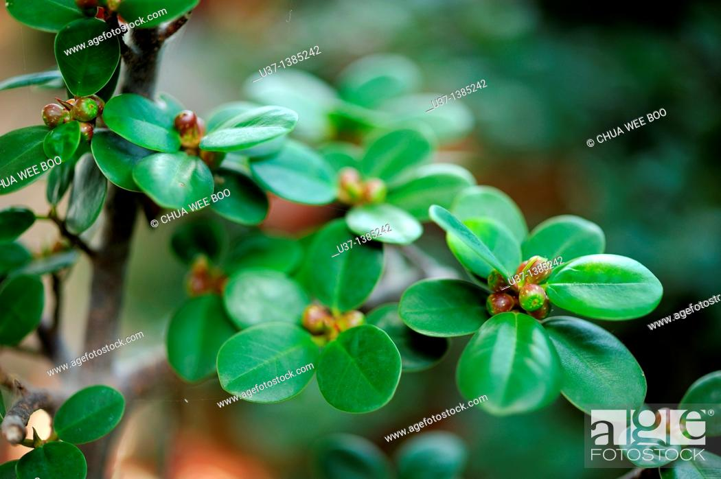 Stock Photo: Green leaves.