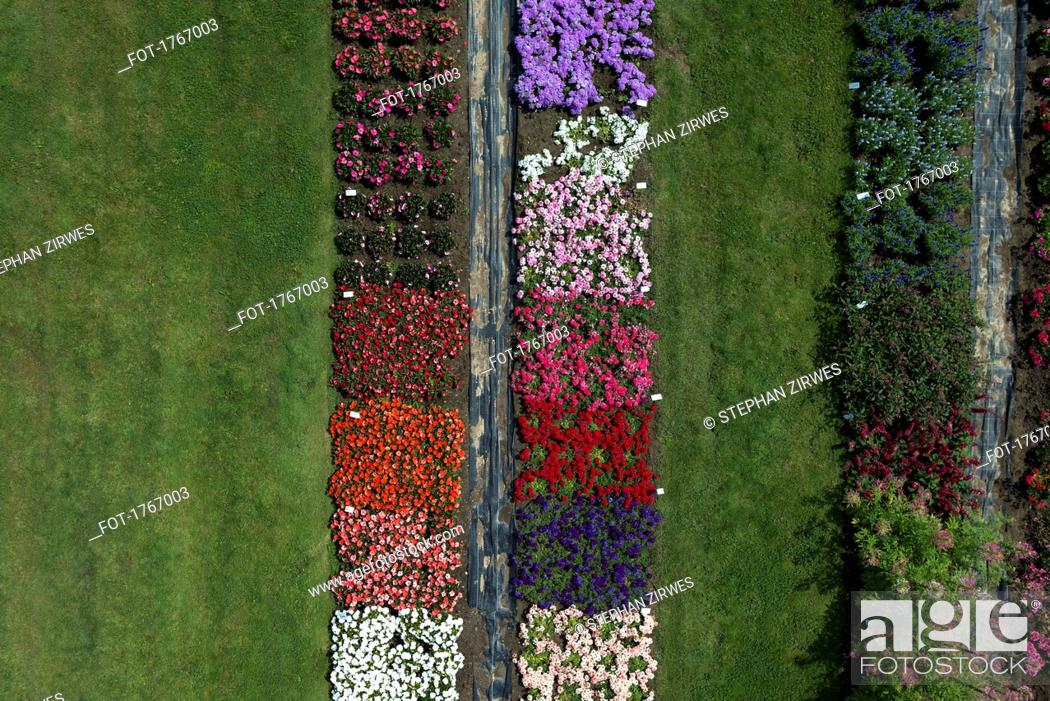 Photo de stock: Aerial view experimental flower crops, Hohenheim, Baden-Wuerttemberg, Germany.