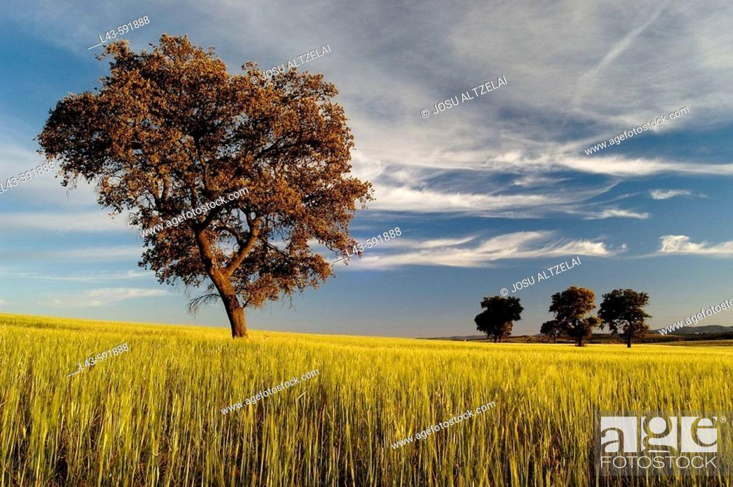 Stock Photo: Country landscape in the afternoon. Castilla-La Mancha, Spain.