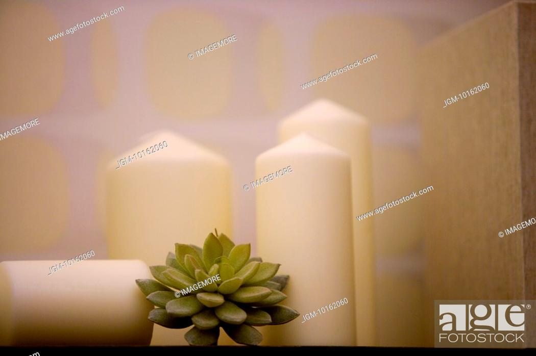 Stock Photo: Candles & Plant.