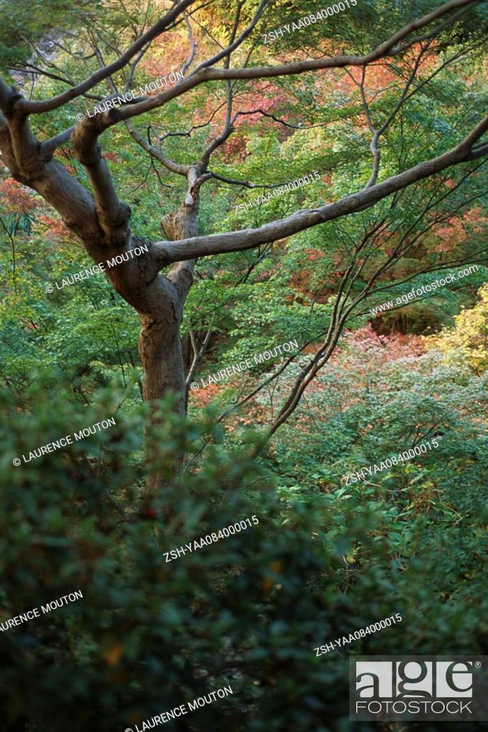 Stock Photo: Tree and undergrowth.