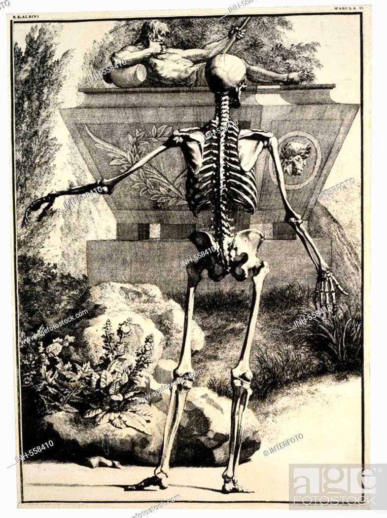 medicine, anatomy, skeletton, backside, copper engraving by J, Foto ...