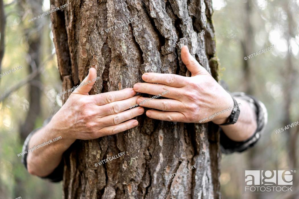 Photo de stock: Senior man's hands hugging tree trunk, close-up.